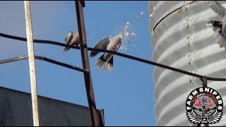 PCP Daystate Air Ranger - Pest Bird Control