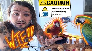 Birds are too LOUD! Neighbors are complaining about my Macaws! What should I do??