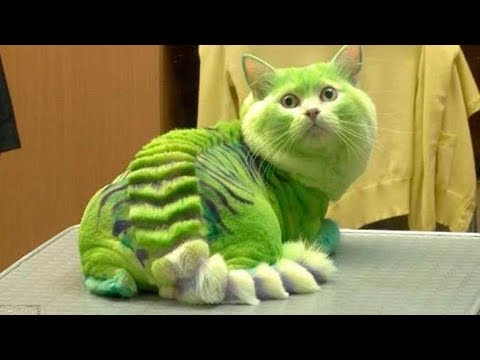 🙀 10 MOST DANGEROUS CAT BREEDS