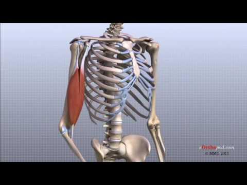 tratamentul articulației salviei
