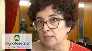 Ortofrutta italiana: servono nuovi mercati