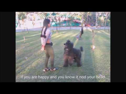 Standard Poodle - Freestyle Routine Training Session - Dog Dancing - 2011