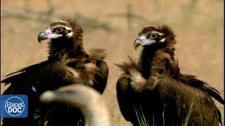 Monfragüe National Park - Part 3 thumbnail