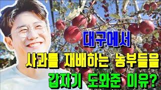 핫! 충격! 영탁, 대구에서 사과를 재배하는 농부들을 …