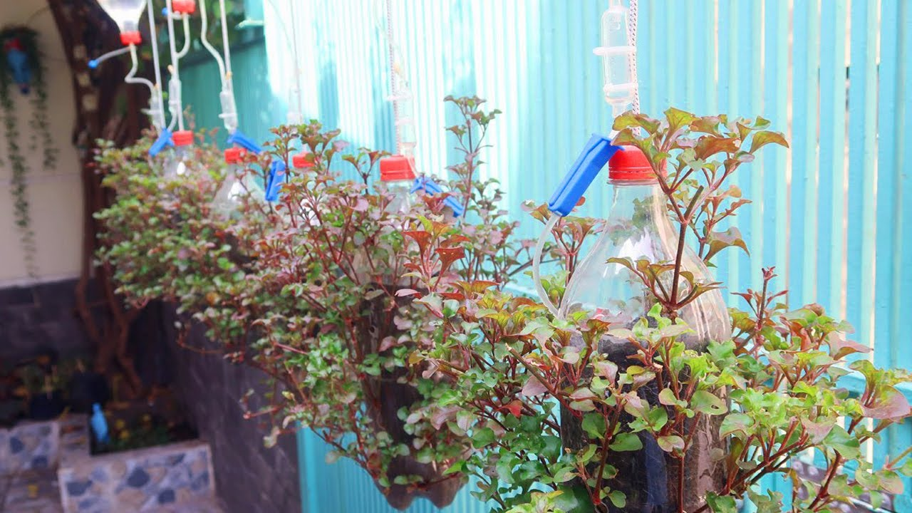 How to make plastic bottles into hanging vegetable pots combined with automatic watering system
