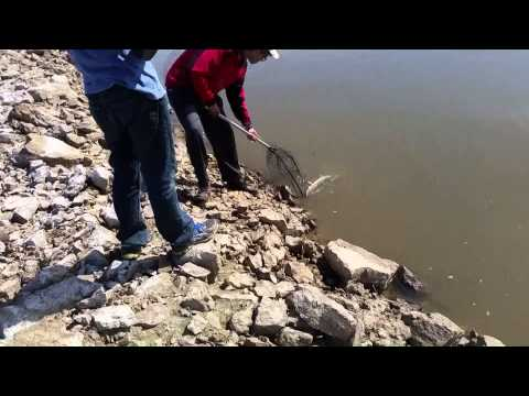Shovelnose Sturgeon Fishing 2015 -- Missouri River Fishing Series