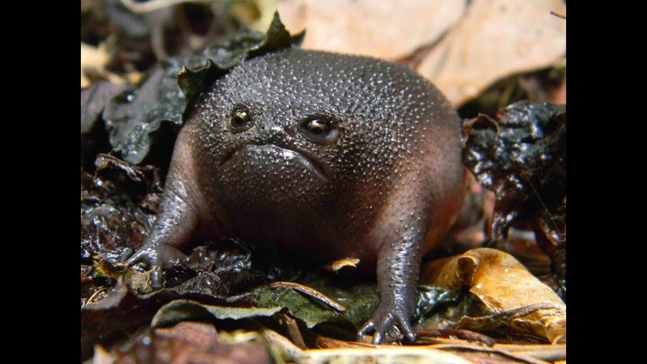 animals weird most ever worlds cool strange creepy species funny looking coolest silly types frogs snout