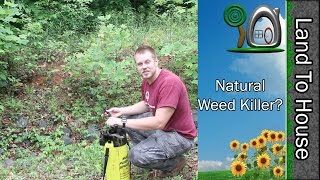 Natural Weed Killer - Does it work?