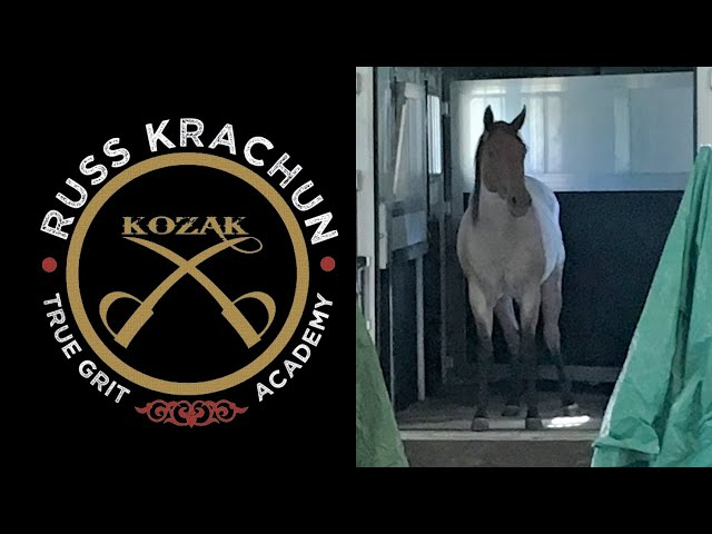 Educate your Horse to Self Load with Confidence, Trust & Solid Minds! True Grit Academy -Foundation