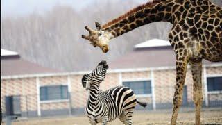 宮崎市フェニックス自然動物園 ☆Please subscribe スマホの人もチャンネ...