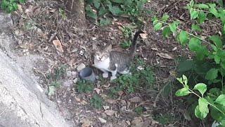 큰 길고양이들 사이에서 홀로 구박받는 가엾은 아기 길냥…