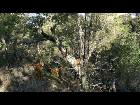 Arizona Dry Ground Mountain Lion Hunt - Chasin' Tail Guide Service