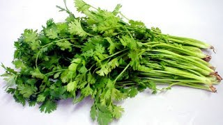 The method of keeping parsley one year without spoilage
