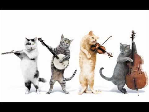 Happy Birthday Cats Meme 11 Reasons Why A Cat Should Sing At Your Next Party Cat Checkup