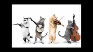 Jingle Cats - Happy Birthday To You