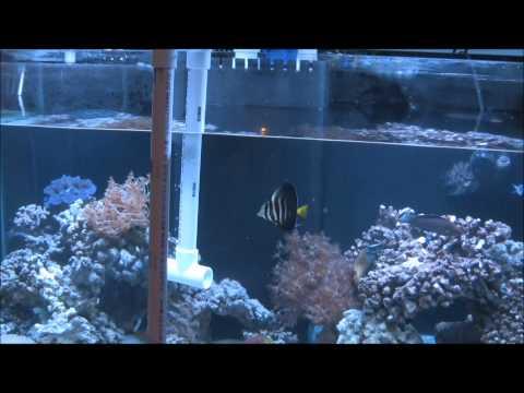 NO Bucket Water Change, Easiest Way, 120 Gal Reef
