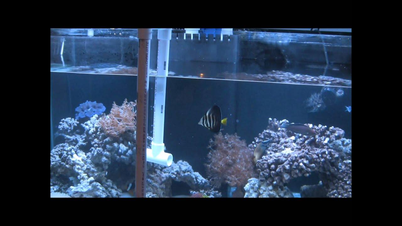 No bucket water change easiest way 120 gal reef doovi for How to change fish tank water