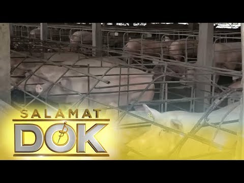 Salamat Dok: Precautions to avoid the spread of African swine fever