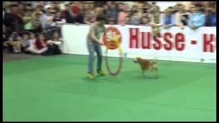 Хозяева заставляли собак танцевать  шоу собрало сотни зрителей видео