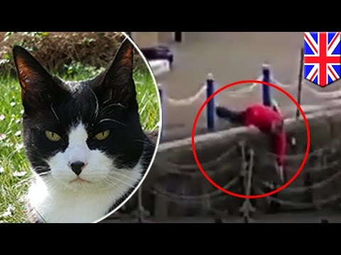 Cat rescues: Hero saves cat who fell into the River Thames in London - TomoNews