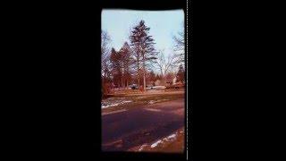 tree removal Livonia Michigan