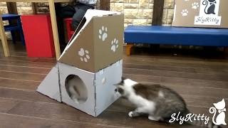 Модульные дома из картона для кошек SlyKitty