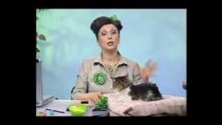 Биология 58. Дикий манул. Шерсть кошек — Академия занимательных наук
