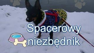 Niezbędnik na zimowy spacer z psem