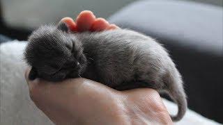 Они думали что спасли милого серого котёнка, но затем его окрас полностью поменялся