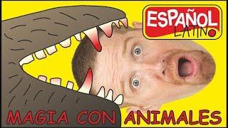 Magia Con Animales | Cuentos Para Niños | Aprender Con Steve y Maggie Español