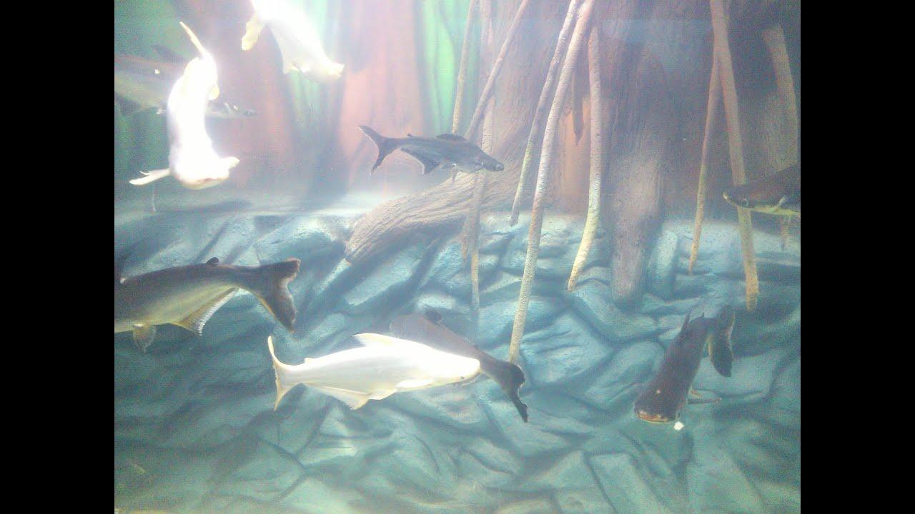 Fish aquarium tarapur - Hd Quality Inside Video Of Renovated Taraporewala Fish Aquarium Mumbai Youtube