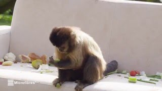 Cute Monkeys Prove Microfiber Fabric is Stain Resistant