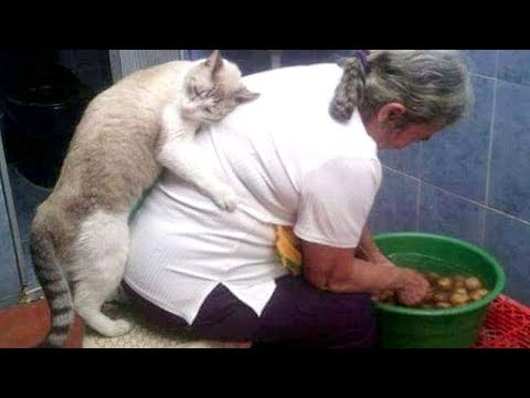 Super FUNNY ANIMAL VIDEOS - Watch and DIE FROM LAUGHING