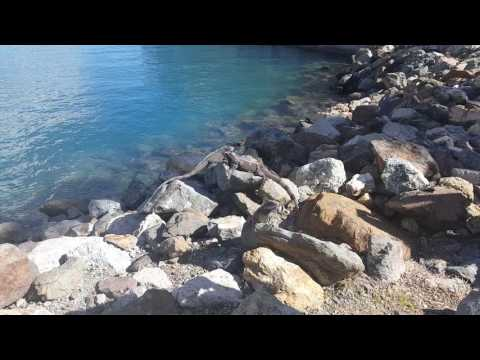 US Virgin Island iguana Port st. Thomas Valentina 201-838-4888