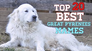 Top 20 names for a Great Pyrenees