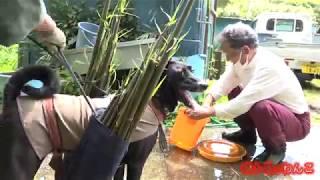南種子町の郷土料理で人気の「食堂美の吉」さんのトットちゃん(2歳) ...