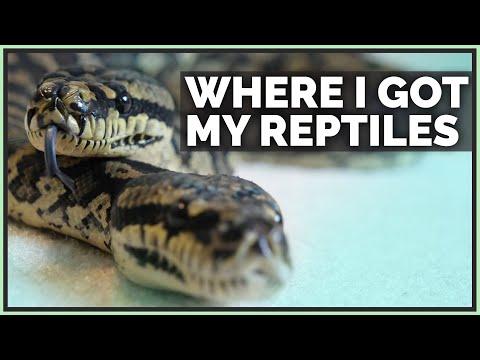 where-i-got-all-my-reptiles!