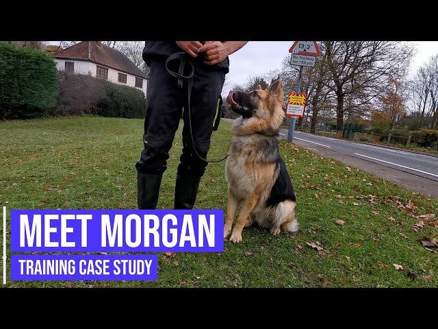 Working on a German Shepherd's aggressive behaviour