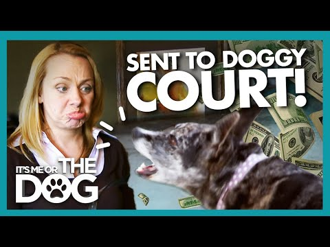 Owner Sent to Court Over Noisy Nuisance Dog! |  It's Me or T