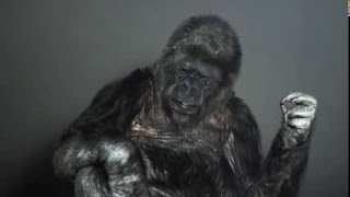 Koko Reviews The Force Awakens