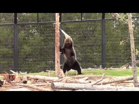 Grizzly vs. Ursack IGBC Test Excerpt