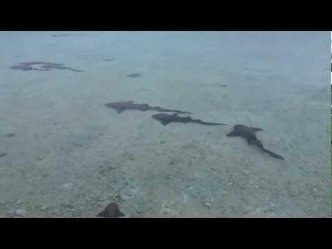 2012-05-23 Bahamas Wildlife
