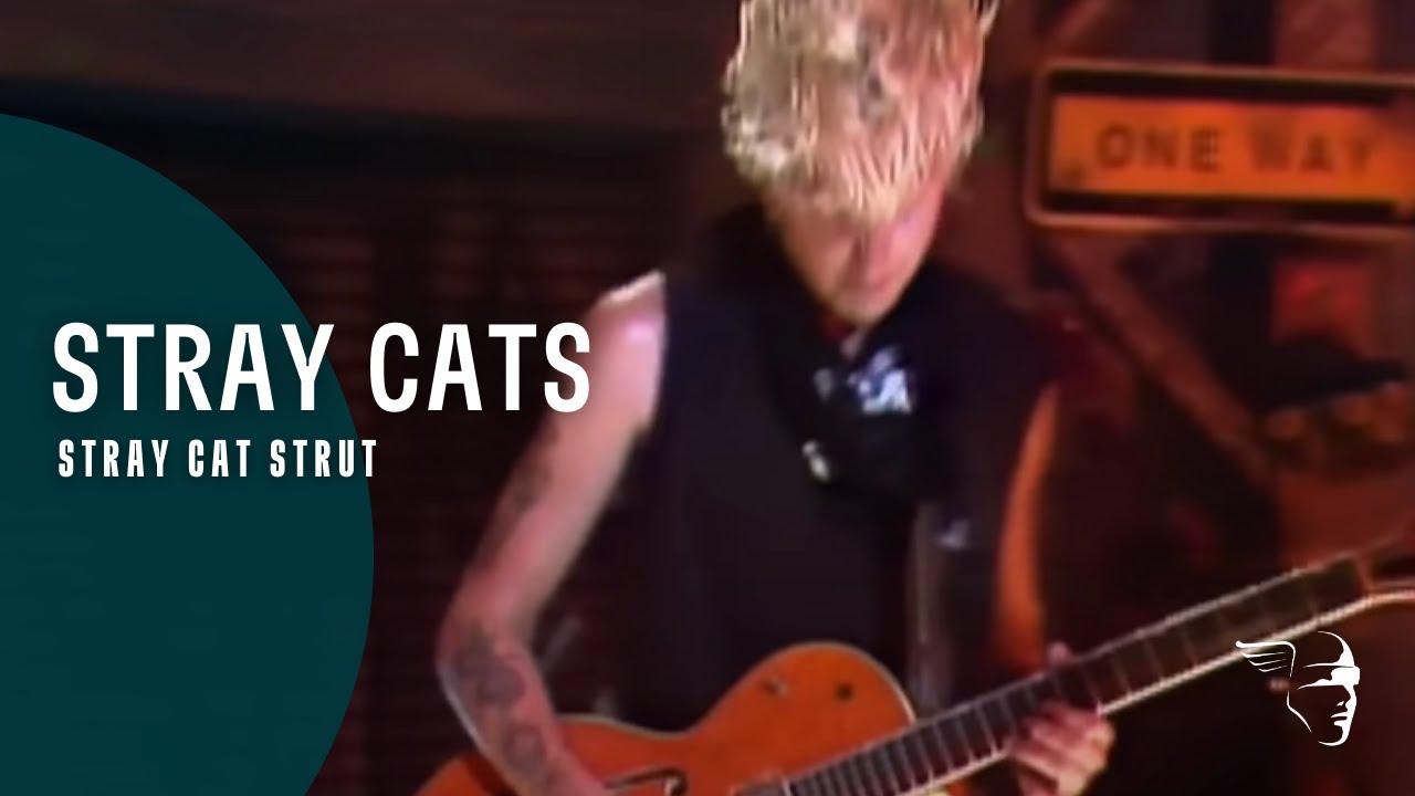 Stray Cat Strut Youtube