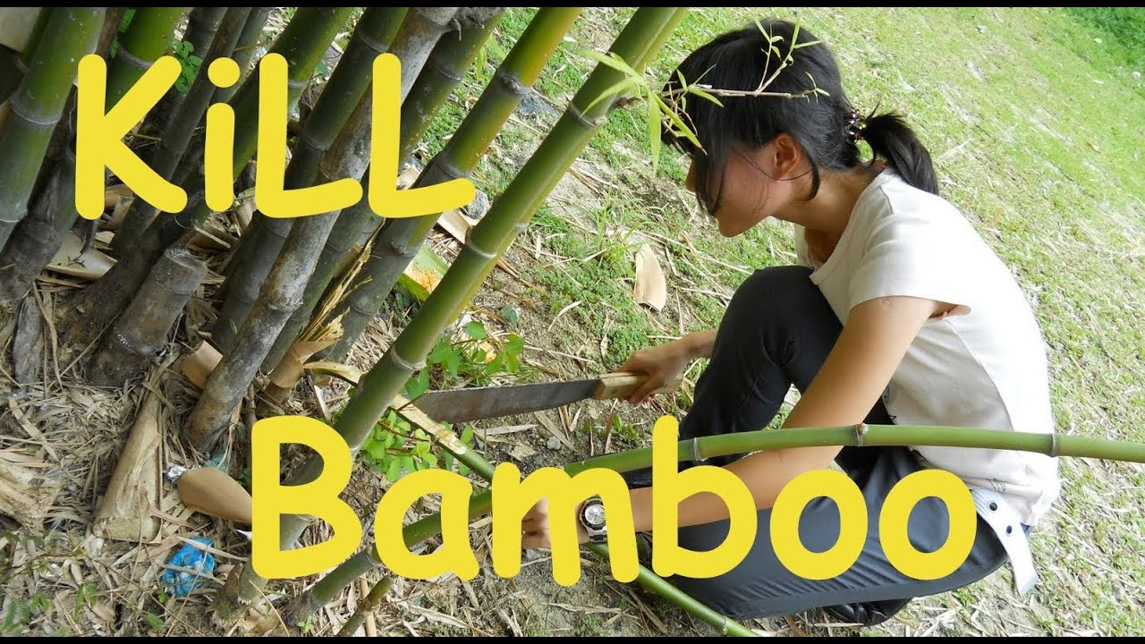 How To Get Rid Of Bamboo From Your Yard Youtube