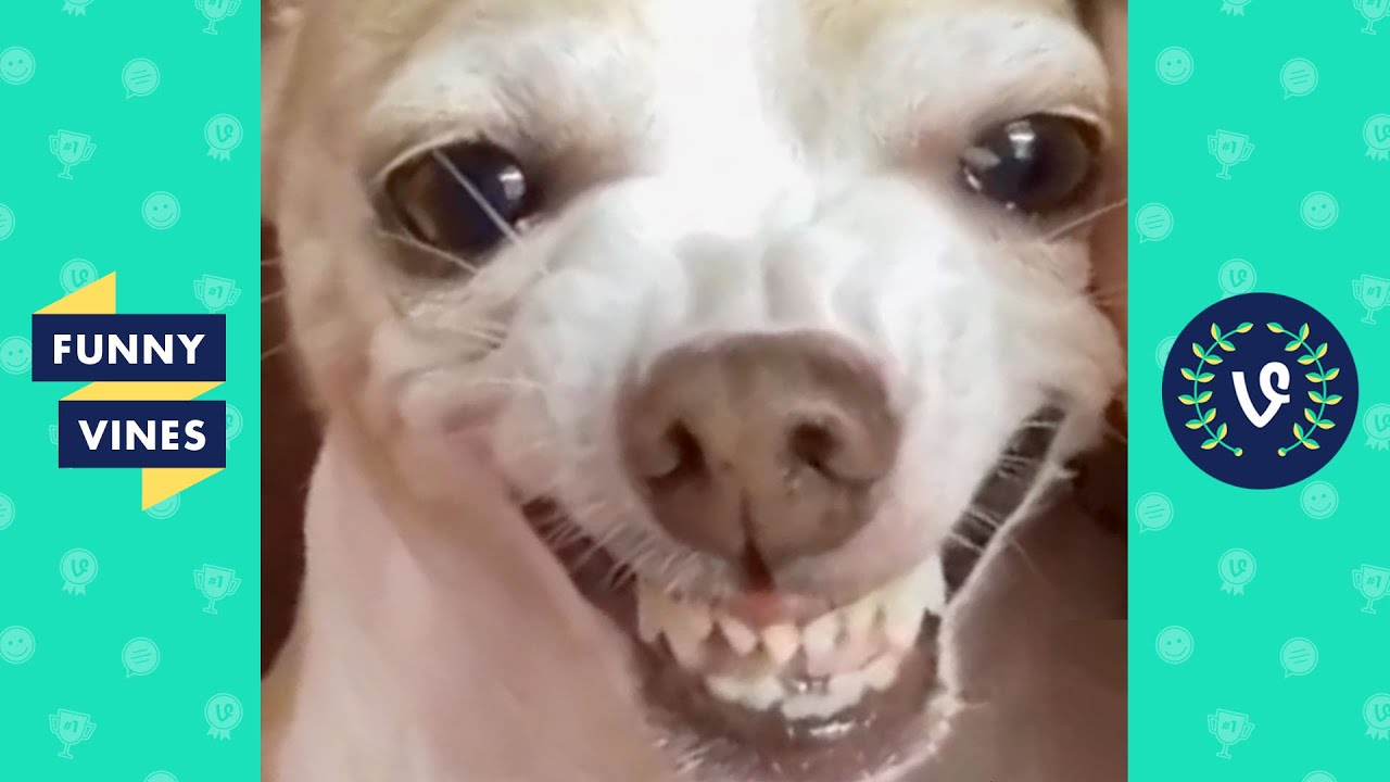 TRY NOT TO LAUGH - Funny Animal Bloopers!