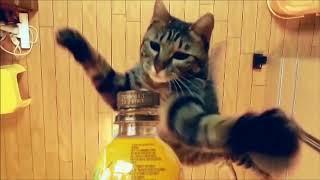The cat doing bottle cap challenge#petthuglife#cutepets#bottlecapchalllenge#capbottle