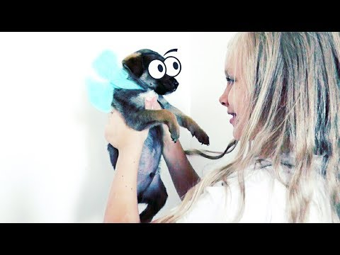 🌺ЩЕНКИ у меня Дома!  💖 Выбираю имена 🌺  Покупки для собак💖  Pets Cute Puppies