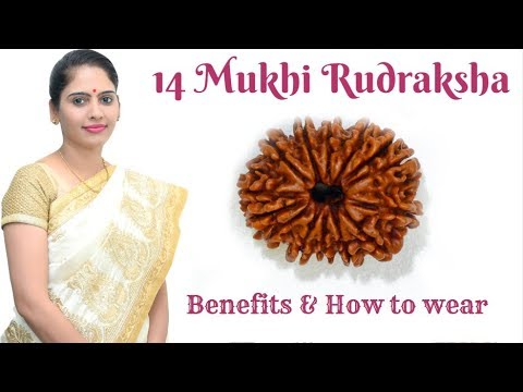 14 Fourteen Mukhi Rudraksha Benefits And Advantages   चौदह मुखी रुद्राक्ष का महत्व - Nidhi Shrimali