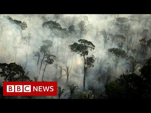 Amazon region: Brazil records big increase in fires – BBC News