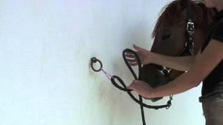 Galop 1: Faire un noeud d'attache